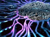 The History, Evolution and Growth of Deep Learning